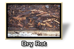Dry Rot Repair Orange County
